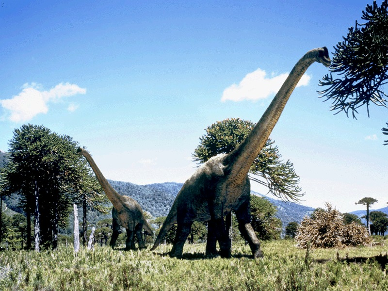 Brachiosauridae brachiosaurus 2 brachiosaurus 3 dinosaurus