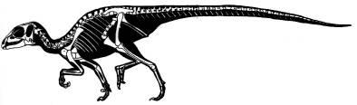 Reconstitution d'un Abrictosaurus consors