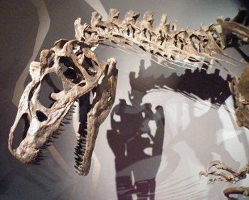 Allosaurus fragilis: BigAL Two