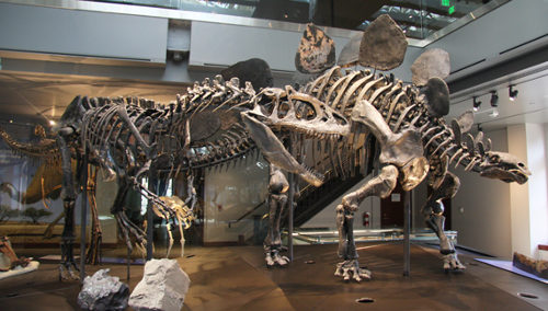 Allosaurus au Natural History Museum of Los Angeles