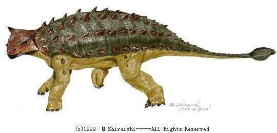 Un Ankylosaure adulte