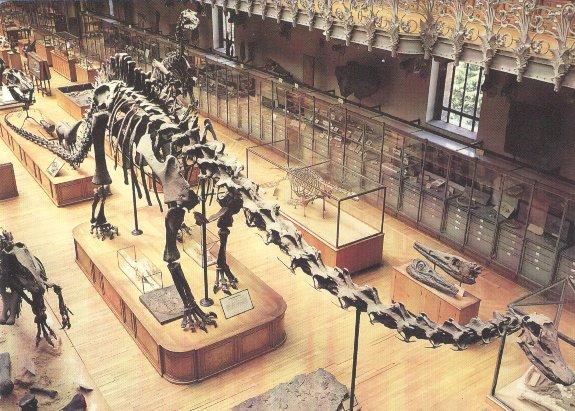 le dinosaure diplodocus dinonews