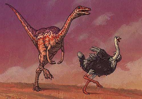 ornithomimides.jpg