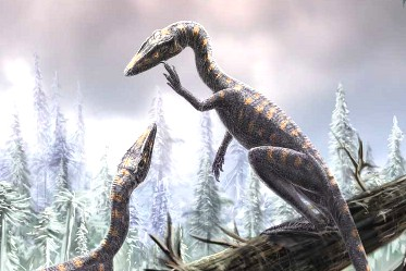 procompsognathus.jpg