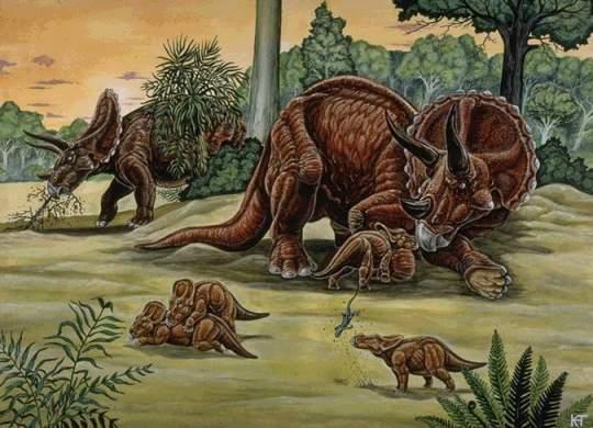 La vie familiale chez les Triceratops | 540 x 390 jpeg 39kB